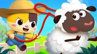 Baby Kitten's Farm Tour | Animal Song | Learn Farm Animals | Kids Songs | Kids Cartoon | BabyBus