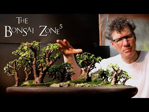 The Bonsai Zone, Questions and Answers and More!, Part 3, Feb 2018