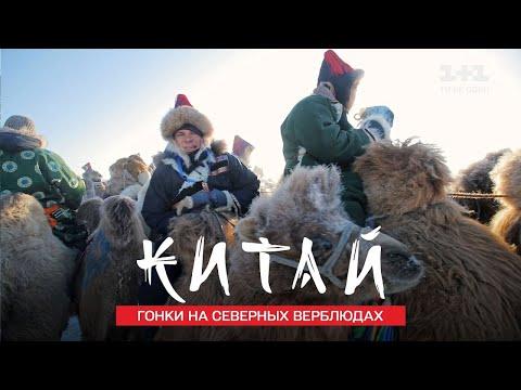 Зимний фестиваль Наадам и гонки на северных верблюдах. Китай. Мир наизнанку 11 сезон 27 серия