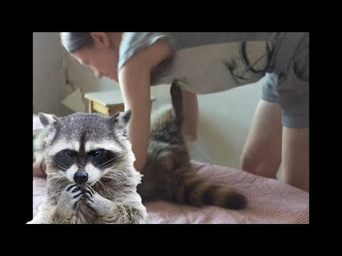 Blind Girl Plays With Cat