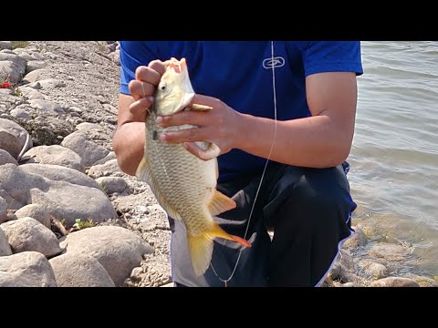 Amazing fishing In Sukhna Lake || Angling  In Reservoir using wheat as baits , Chandigarh (Part - 3)