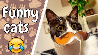 Cats are so funny and cute - Funny cat compilation (March 2019)