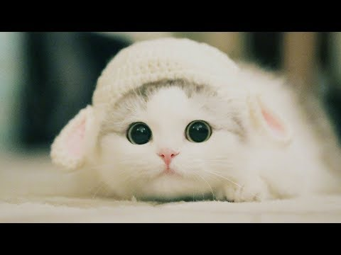 Cute Kittens Will Melt Your Heart - Kittens That Will Make You Fall In Love - UCq5hgY37WAryZCwmehDyCaQ