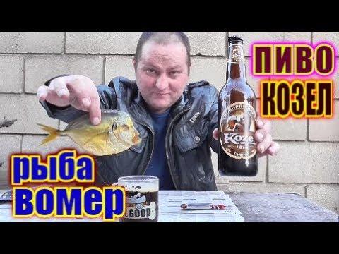 """Пью ПИВО """" Velkopopovicky Kozel"""" под рыбу ВОМЕР... photo"""