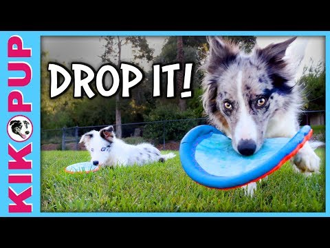 How to train a dog DROP IT