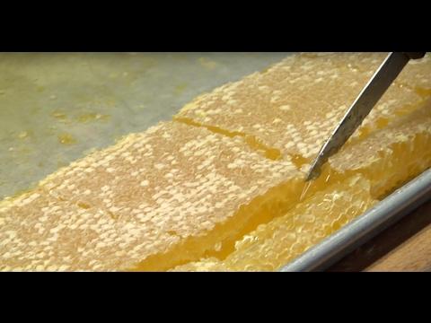 Honeycomb - UC_AjZW6l-VKVNlhDKA5tlxw