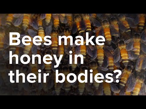 Bees Make Honey in the Bodies - Scientific Miracles of the Quran Ep. 8