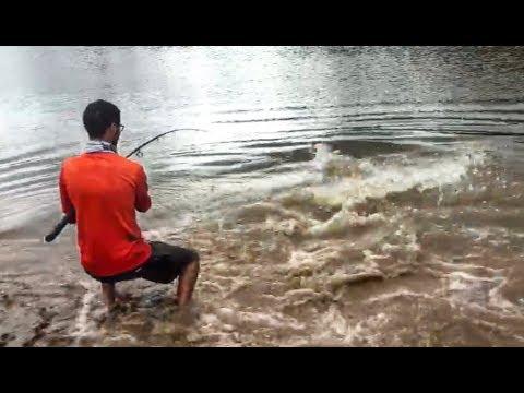 This FISH is WAY BIGGER than I AM! - UC94AoWq2bvwYmwBp3fotjbg