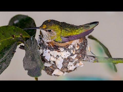My Hummingbird Nest Story 💕🙏🏻