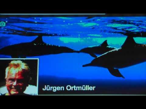 Delfinhaltung verbieten - WDR 2 Interview mit Jürgen Ortmüller, Wal- und Delfinschutz-Forum (WDSF)