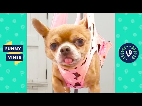 [1 HOUR] FUNNY ANIMALS OF THE YEAR | BEST OF THE YEAR 2020