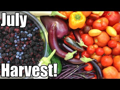 July Garden Harvest! Local Food at its BEST