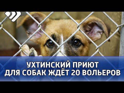 Ухтинский приют для бездомных собак «Добрый город» ждёт двадцать новых вольеров для животных