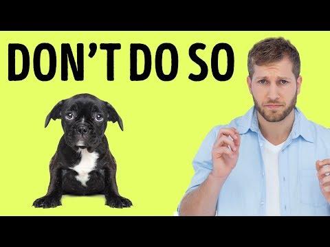 12 Things Your Dog Hates About You - UC4rlAVgAK0SGk-yTfe48Qpw