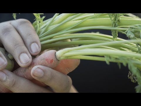 great big story :: planting the seeds of sustainability