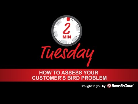 How to assess your customer's bird problem