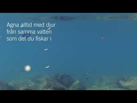 Hjälp till att stoppa invasiva arter i sjöar, hav och vattendrag