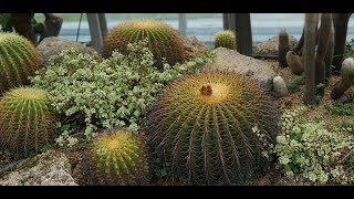 LIVE FROM SINGAPORE - Changi airport cactus garden - Cactus Garden - Changi Airport T1