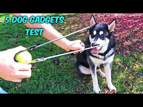 5 Dog Gadgets Put to the Test - Part 10 - UCe_vXdMrHHseZ_esYUskSBw