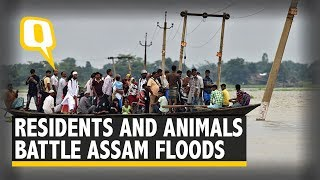 Residents and Animals Reel Under the Impact of Assam Floods   The Quint