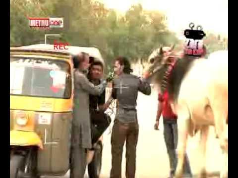 Cow in Rakshaw