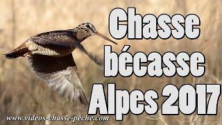 Chasse à la bécasse 2017 - Alpes