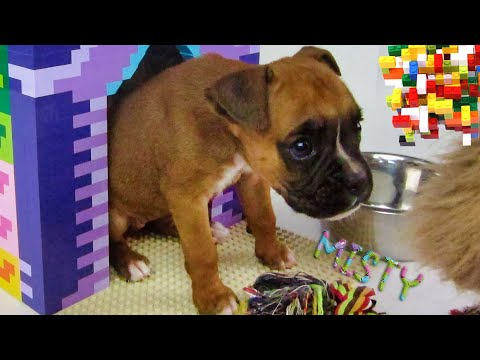 Funny Puppies And Cute Puppy Making Doghouse. - UCoWsJwtoDzBfFI-egTXG6Dg