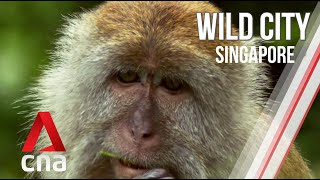 Singapore's Urban Wildlife | Wild City | Full Episode