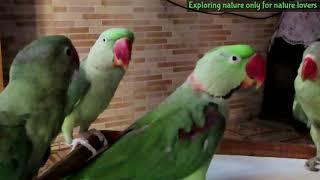 Talking parrots | bolne wale tote | बोलने वाले तोते