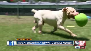 Dog of possible deployed military member abandoned at shelter by caretaker