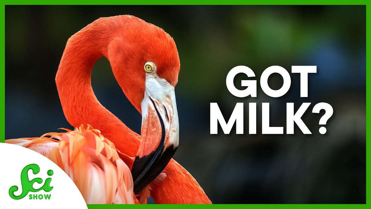 "6 Animals That Aren't Mammals and Produce ""Milk"""