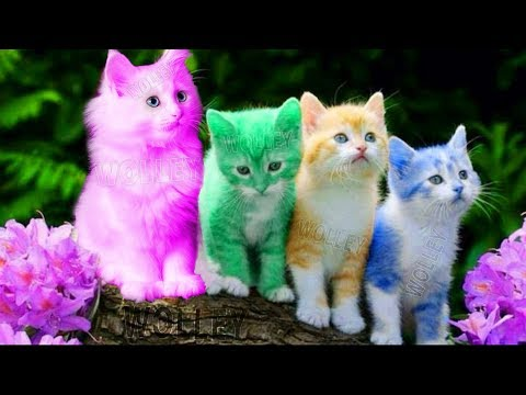 Cute Kitten Cat Colorful Learning Color Video For Kids - Funny Educational Videos for Kids Toddlers - UCIcbWJtXOjzm38IxPxaOQ_Q