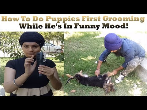 How To Do Puppies First Grooming While He's In Funny Mood! - UCdLxz0VsFj-0D7jqADBPY5w
