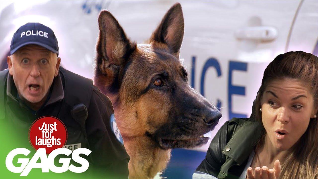 Dog Eats Driver's License Prank!!