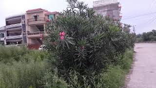 Morning Walk and Green Plants in Hostel City Islamabad Part 7