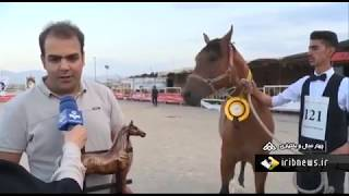 Iran Second Darreh-Shuri Horse beauty contest, Shahr-e Kord county مسابقه زيبايي اسب دره شوري