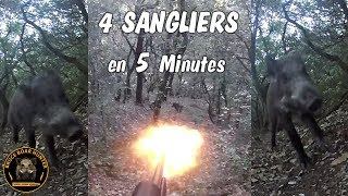 Chasse sanglier 2018