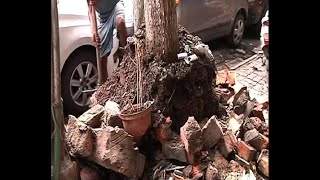 KMC starts demolishing construction of concrete around trees on pavements as per order of Calcutta H