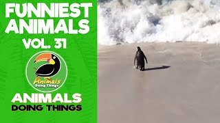 🐒 Try Not To Laugh Funniest Animals Vol. 31 | Animals Doing Things
