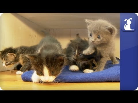 Khloe Kardashian Odom - Baby kittens explore while mom watches - The Litter Episode 6 - UCPIvT-zcQl2H0vabdXJGcpg