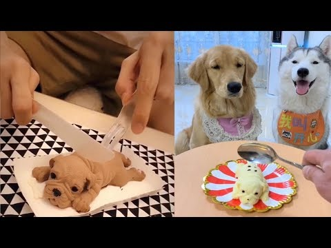 Dog Reaction to Cutting Cake - Funny Dog Cake Reaction Compilation - UC24KUWwW8-rJu3GZKLPYvcw