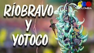 Riobravo Nature Reserve and Yotoco Forest– Traveling Colombia