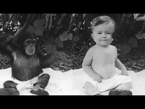 Ape and Child Raised Together in Scientific Experiment