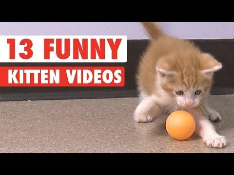 13 Funny Kittens Video Compilation 2016 - UCPIvT-zcQl2H0vabdXJGcpg