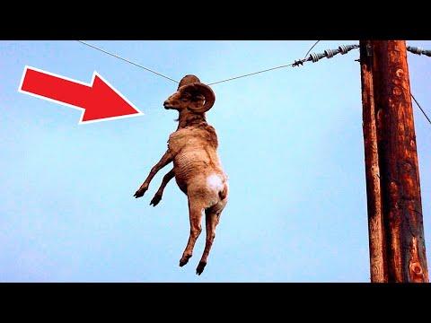 Посмотрите, что Бывает, Когда Животные Просят Помощи у Людей