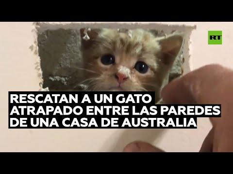 Rescatan a un gato que quedó atrapado entre las paredes de una casa