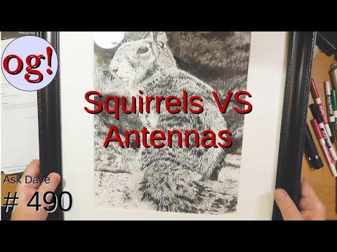 Squirrels VS Antennas (#490)