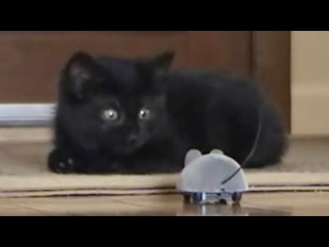 Epic Funny Scared Cats Compilation! Epic Funny Cats! - UCYK1TyKyMxyDQU8c6zF8ltg
