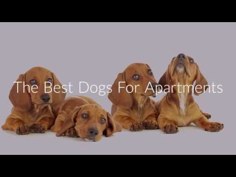 The Best Dogs For Apartments