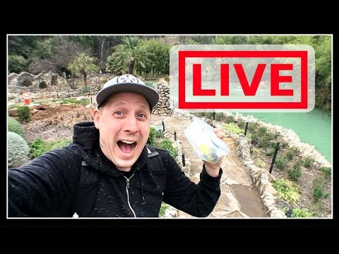 🔴 LIVE: GEOCACHING IN JAPANESE GARDEN!